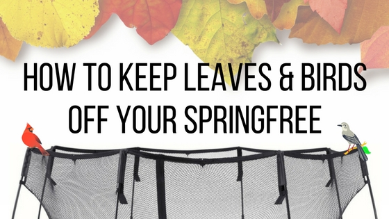How To Keep Leaves & Birds Off Your Springfree